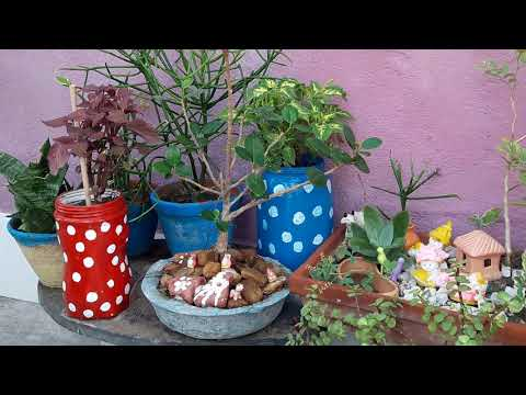 Small space gardening ideas/  out of West meterials…..24.02 18