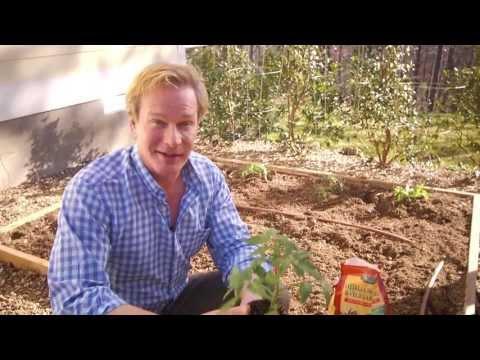 Jobe's Organic Gardening
