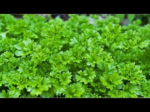 Organic Gardening Tips – Improve Your Soil and Organic Herb Gardening