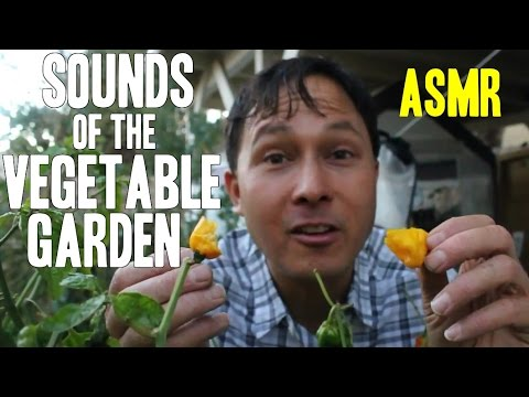 ASMR Sounds of the Organic Vegetable Garden Challenge