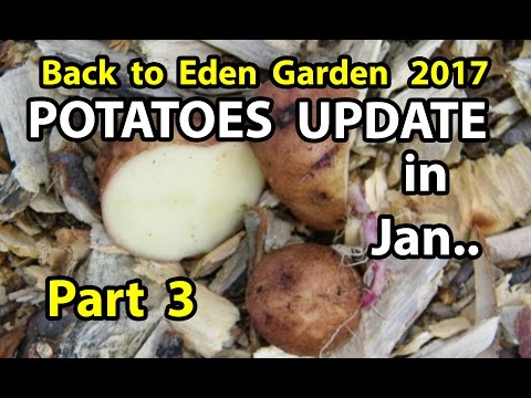 Back to Eden Organic Gardening Method 101 Soil Improvement with Wood Chips Garden Series  Part 3