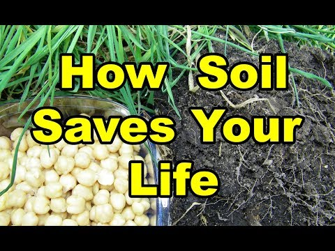 How Soil Saves your LIFE in Gardening from Soil, Seed, Tree, to Animals to Us. Part 4