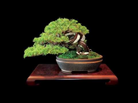 Best Bonsai Trees Gardening Ideas For Backyard #3