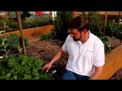 Organic Gardening – Dos and Don'ts