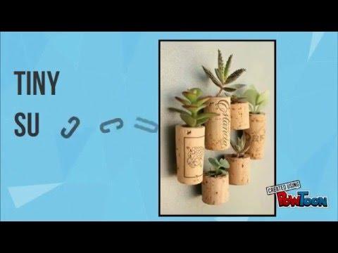 Small garden ideas for indoor gardening