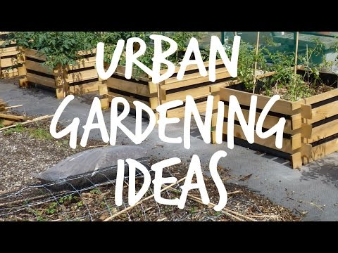 Need Urban Gardening Ideas?
