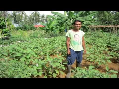 Organic Farming in The Philippines.
