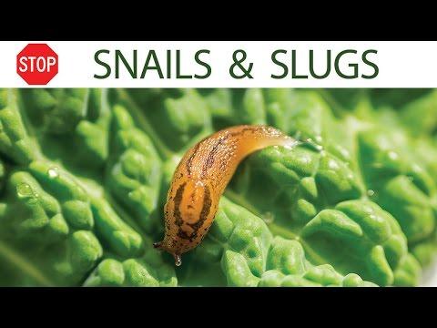 How to control snails & slugs in your garden – 5 EZ organic methods
