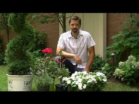Plants to Use in French Landscaping : Landscaping Ideas
