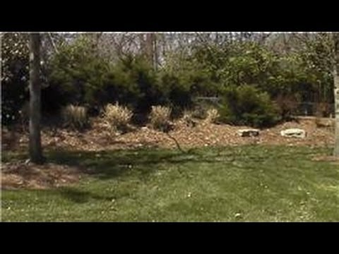 Landscaping Tips : Landscaping Ideas for Property Boundaries