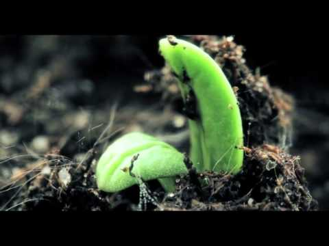 Organic Gardening – Learn how to grow healing food