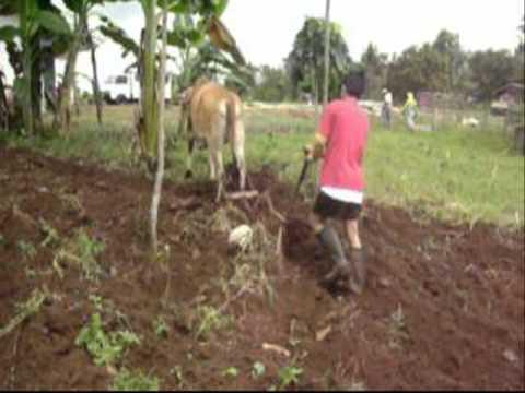 Organic Gardening   Land Preparation