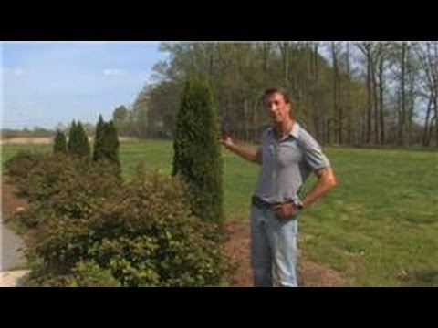 Landscaping Tips : Landscaping Ideas to Separate Your Neighbor