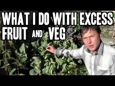 What I do with Excess Fruits & Vegetables & More Organic Gardening Q&A