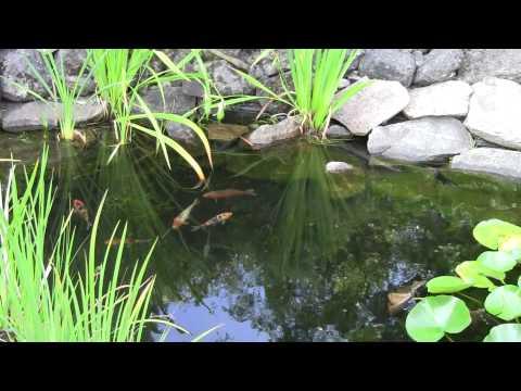 Backyard Landscaping Ideas | Rainbow Landscaping | Toronto