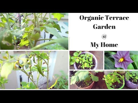 Maadi thottam in tamil | Terrace garden ideas | மாடி தோட்டம் | Terrace garden ideas in tamil | Diml