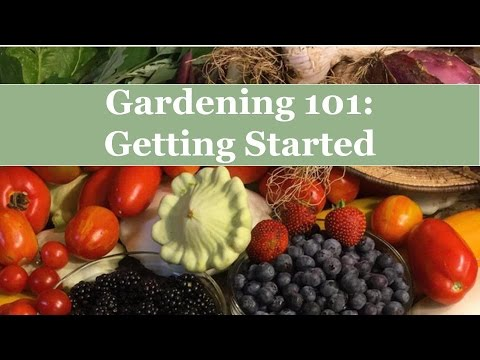 Gardening 101: How To Start Your Organic Garden