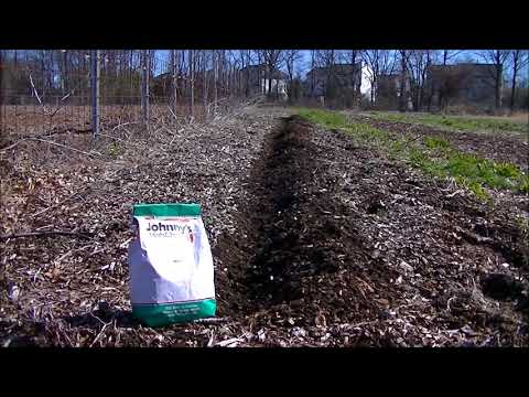 BREAKING the  #1 RULE in WOOD CHIPS gardening. Can I plant directly into wood chips?