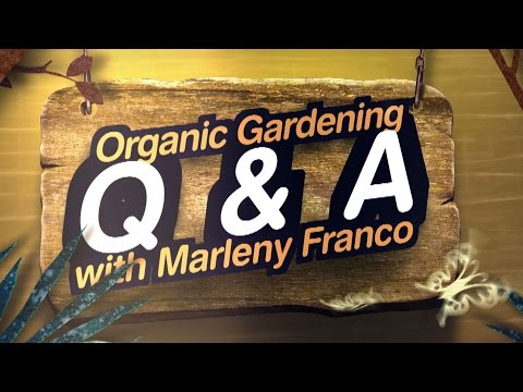 Benefits of Raised Beds:Organic Gardening Q & A