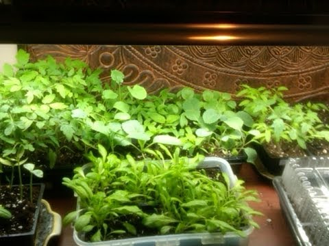 Organic Gardening ~ Early Indoor Seed Starting Tips