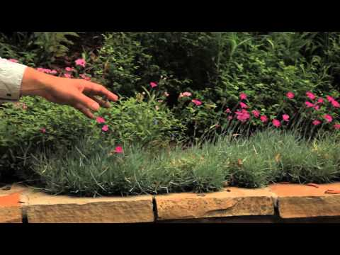 Planting Designs for Tiers : Landscaping Designs & Ideas