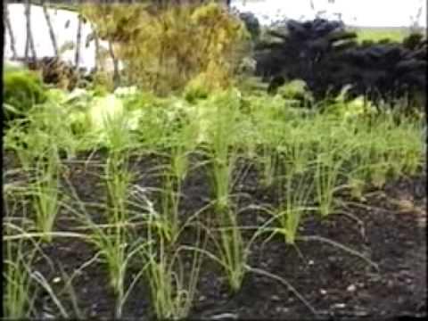 Charles Dowding: Organic Gardening