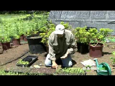 Organic Gardening – Seeds and Seedlings