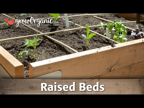 How to Grow Organic Vegetables in Raised Beds