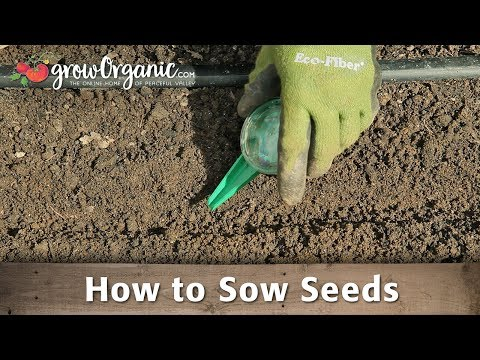 How to Sow Seeds in Your Organic Vegetable Garden