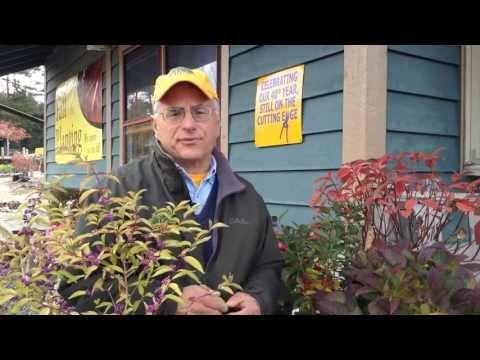 Fall Landscaping Ideas — Alternatives To The Burning Bush