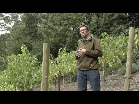 Hillside Landscaping Ideas – Home Vineyard