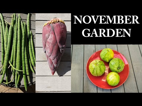Welcome To The California Garden In November – Gardening Tips, Ideas, Hacks  & More!