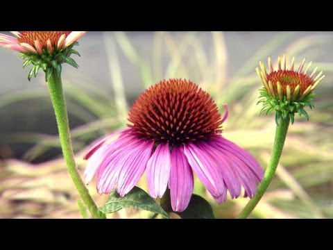 Backyard Landscaping Ideas – HGTV
