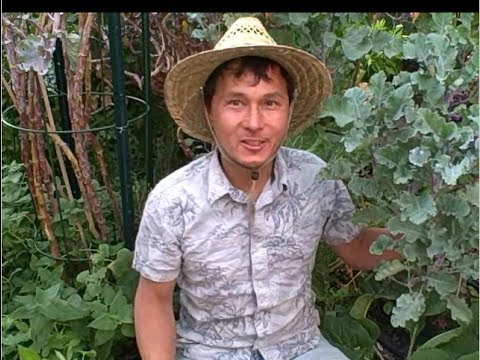 How to Grow a Perfect Organic Vegetable Garden