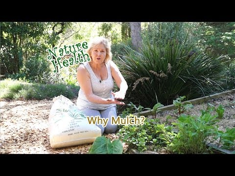 Organic Gardening: Why mulch your organic herb garden?
