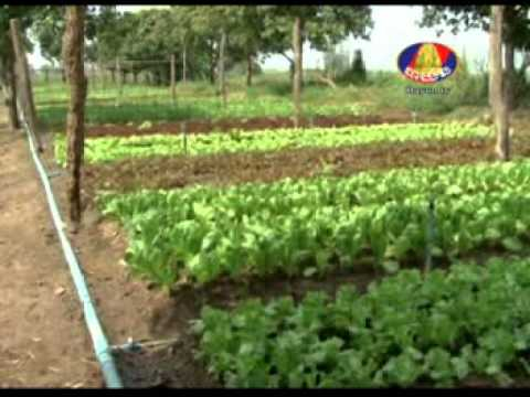 Amarak Organic Garden on Bayon TV