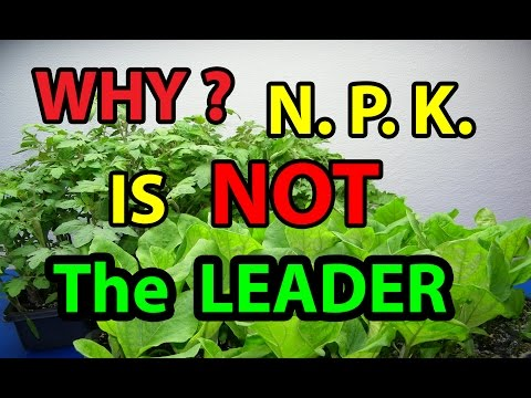 WHY? N.P.K. is NOT Leader in NO Till Homesteading Gardening Organic Vegetables  for beginners 101