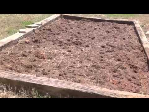 Organic Gardening: Getting Started
