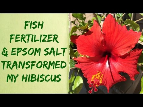 Liquid Alaska Organic Fish Fertilizer & Epsom Salt Plant Results – Organic Gardening Tips