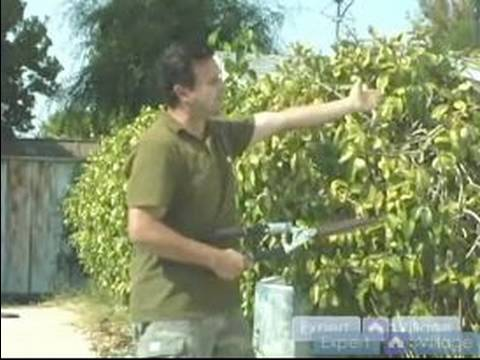Easy Pool Landscaping Ideas : Trimming the Hedges for Pool Landscaping
