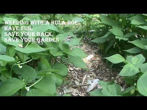 Organic Gardening:  Weeding With a Hula Hoe — Save Your Back, Save Your Garden