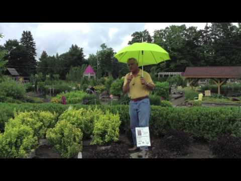 Landscaping Design – Color Ideas