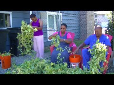 Organic Gardening | Sweet Pea Harvest