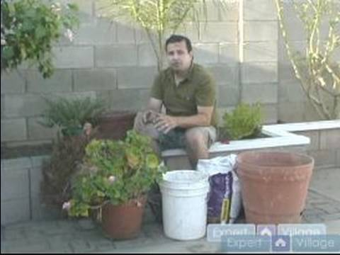 Easy Pool Landscaping Ideas : Where to Put Potted Plants When Pool Landscaping