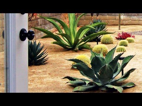 Amazing Landscape Designs with Drought-Tolerant Plants
