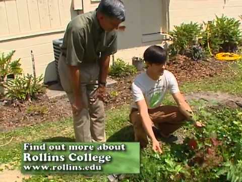 Central Florida Gardening – Organic Raised Beds