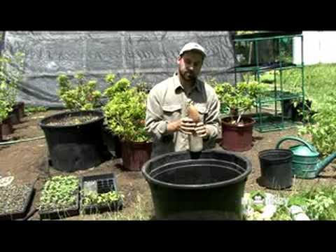 Organic Gardening – Propagation Methods
