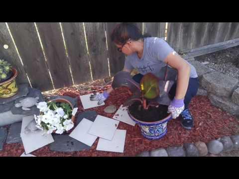 Jocelyn's Simple Gardening Landscaping Ideas