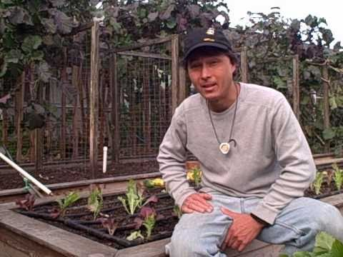Planting a Vegetable Garden for Winter in Northern California