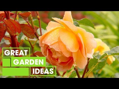 How to Care for Roses in Winter | Gardening | Great Home Ideas